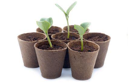 Pflanzenkeimlinge in zersetzbaren Töpfen